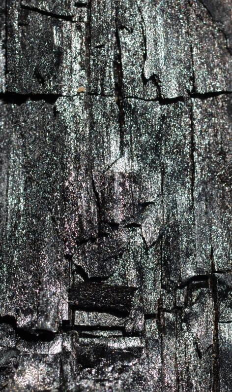 DSC_0033 (3) - Kopie - Kopie