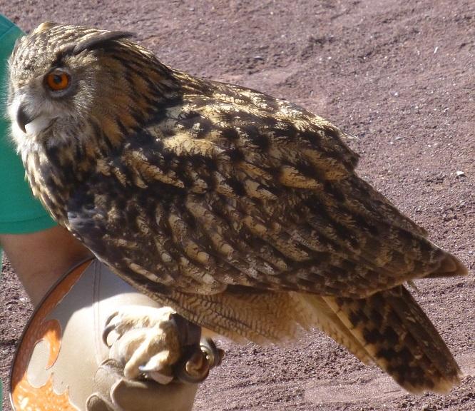 Vogel5