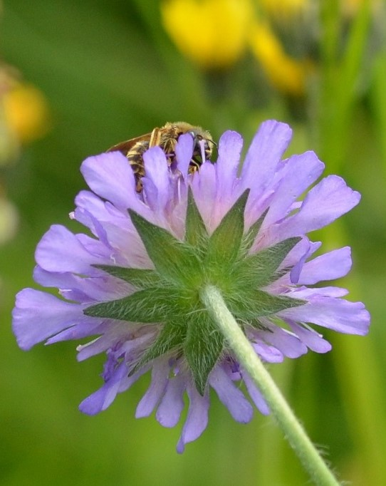 Blüte1 (2)